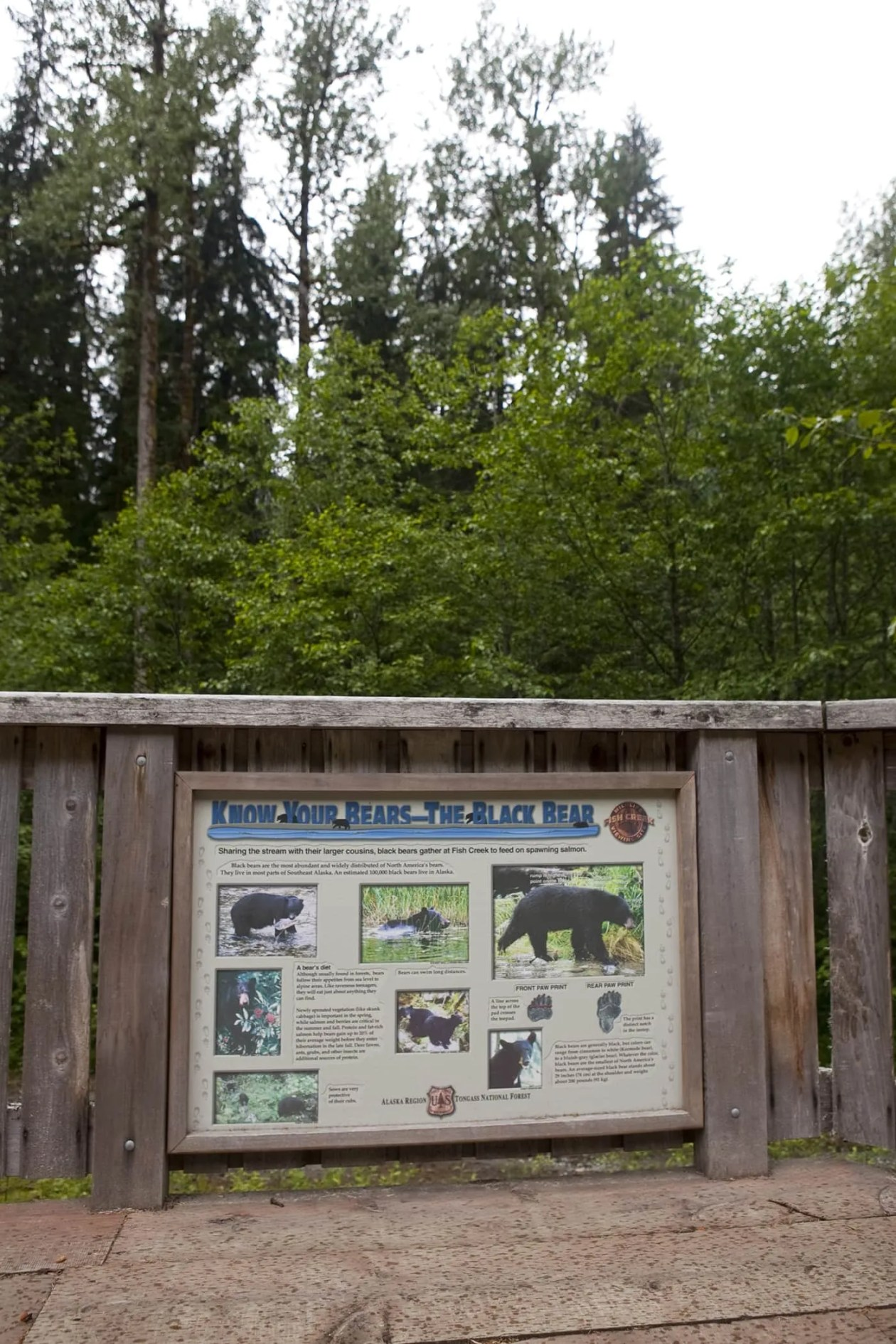 Know Your Bears - the Black Bear - at Fish Creek Wildlife Observation Site at the Tongass National Forest in Hyder, Alaska.