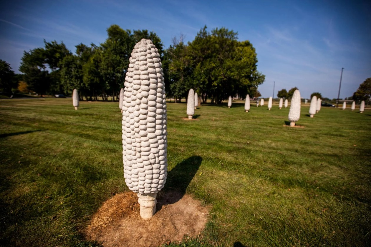 Field of Giant Corn Cobs in Dublin, Ohio