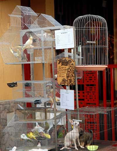 Un negocio privado vende animales afectivos en al Barrio, el 11 de Febrero de 2011, La Habana, Cuba. Foto: Calixto N. Llanes/Juventud Rebelde (CUBA)