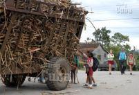 Pioneros agarran de una carreta trozos de caña de azúcar a salida de la escuela, el 21 de Enero de 2009, Artemisa, Cuba. Foto: Calixto N. Llanes/Juventud Rebelde (CUBA)