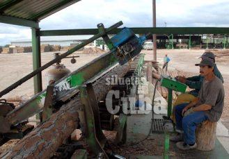 Los obreros cortan los troncos con una sierra gigante, el 14 de Enero de 2011, Pinar del Río, Cuba. Foto: Calixto N. Llanes/Juventud Rebelde (CUBA)