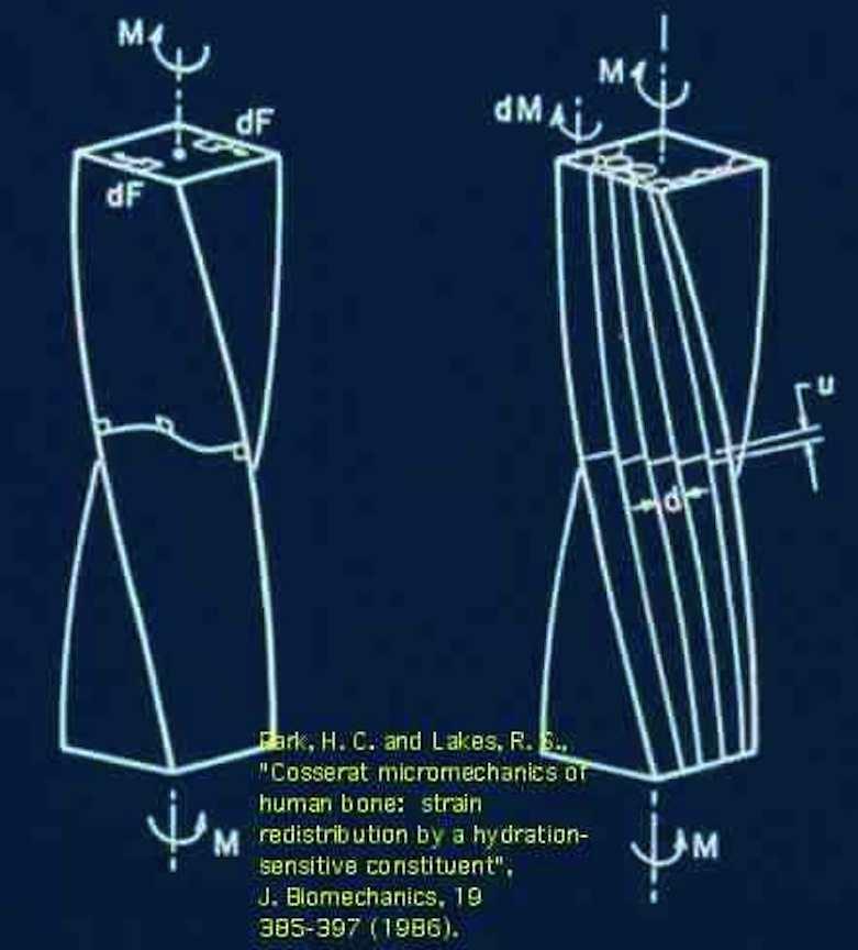 human long bone diagram house wiring circuit cosserat elasticity; micropolar elasticity