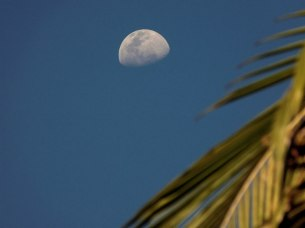moon-palm-2small