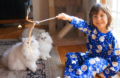 What is a Silver Persian Cat?