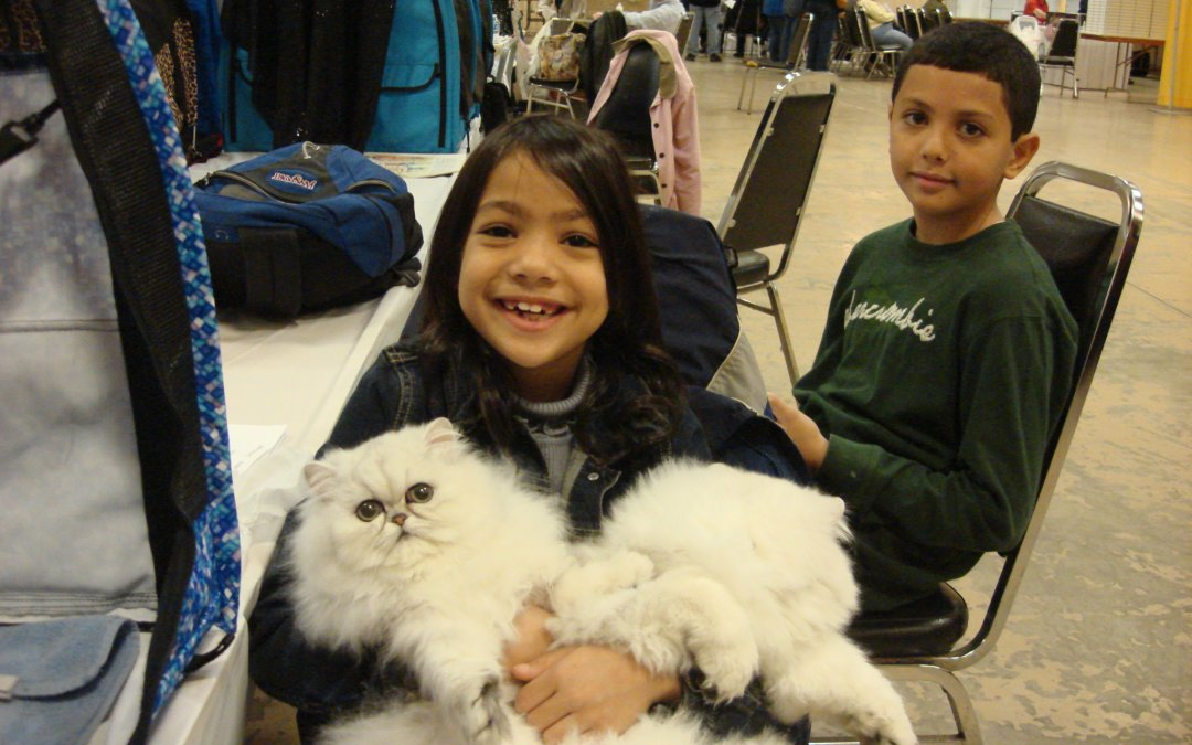 Dayton cat fanciers CFA cat show 11/12-11/13/2011