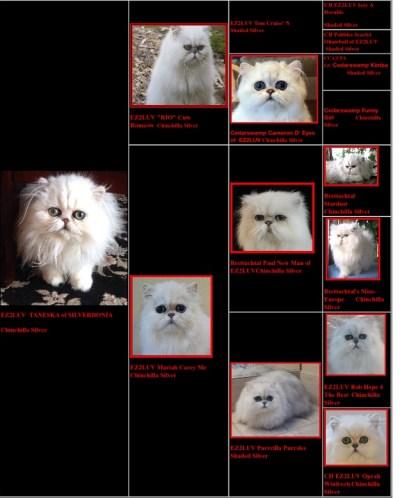 tan pedigree