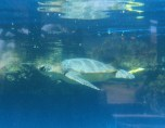 Aquarium 072