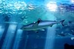 Aquarium 133