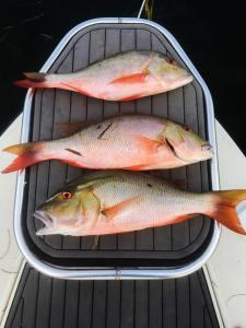 Miami nearshore fishing charters