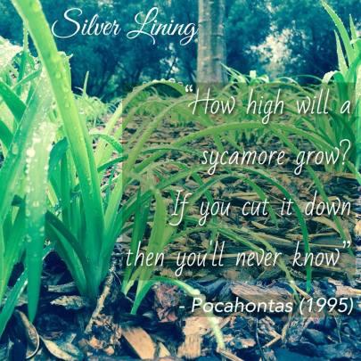 https://silverliningcommunity.wordpress.com/2016/06/15/how-high-will-a-sycamore-grow/