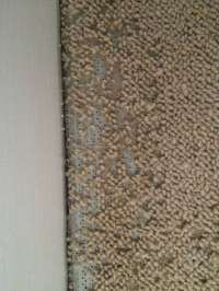 Carpet Moth Control   Silver Lining Floor Care