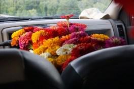 zinnias in the truck