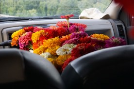 zinnias in the truck