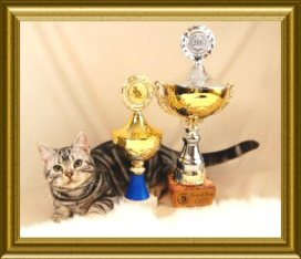 OP-Gus-Mar-23-2010-American-Shorthair silver-tabby-cat-wins-best-of-show-and-best-of-best-trophies-at-Frankfurt-International-cat-show