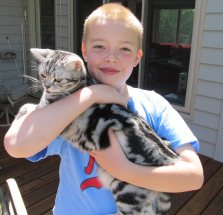 Image of American Shorthair silver tabby cat held by boy in blue shirt