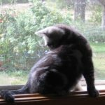 Image of window perch for kitten supplies