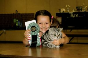Image of little girl with American Shorthair silver tabby cat winning best in show