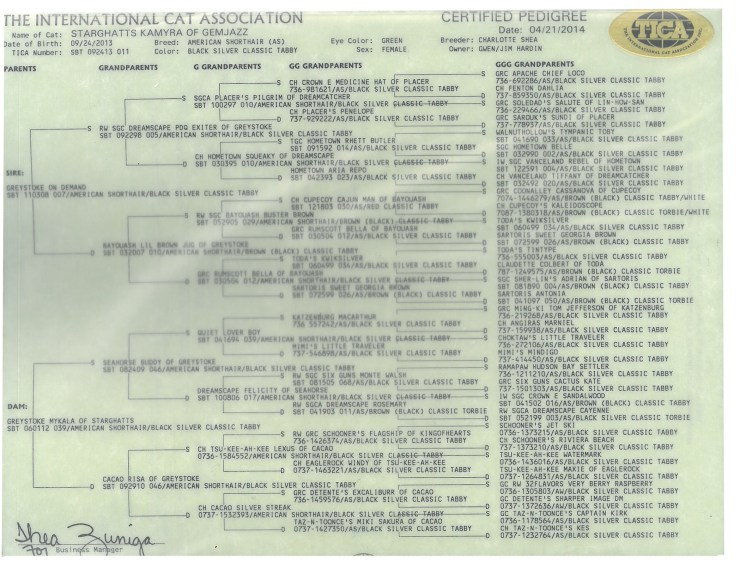 Image of CFA pedigree for Starghatts Kamayra