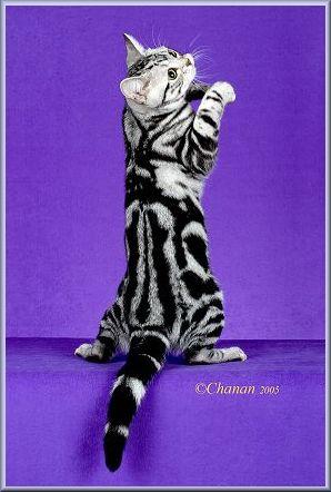 Example Dorsal Striping ©Chanan