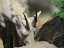 Nice horns
