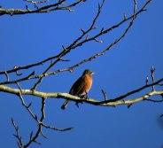 Robin enjoying the afternoon sun