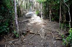 Lahar followed by flash floods in January: the remains of the trail.