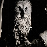 [Silver Sunbeam] Birds of Prey Tintypes - Andy Martin - 3