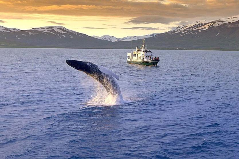 European break destination Whale Watching