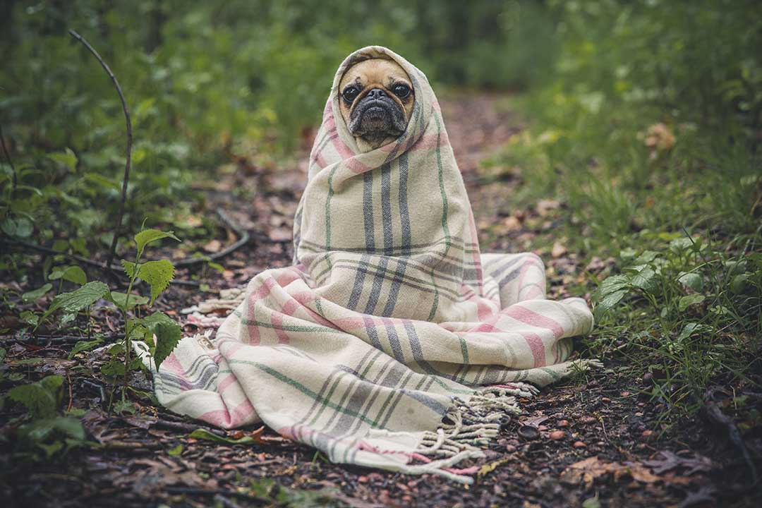 Dog wrapped up warm on dog friendly holidays