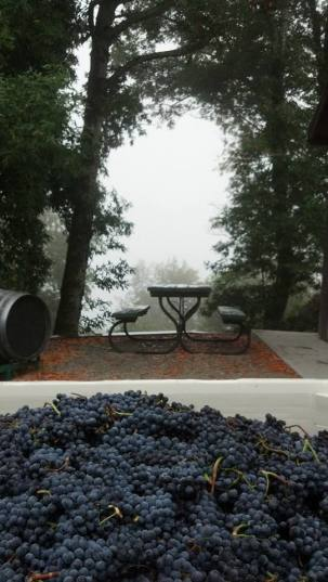 Grapes waiting for processing.