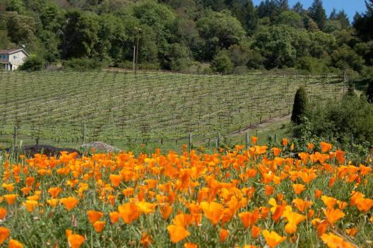 The Vineyard in April
