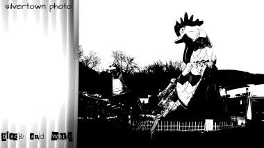 Crno i bijelo foto 25
