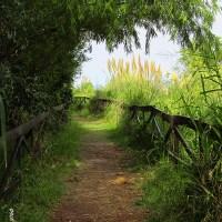 Por los senderos de la Reserva Ecológica de Vicente López