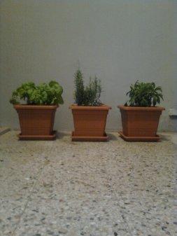 roma, balconcino