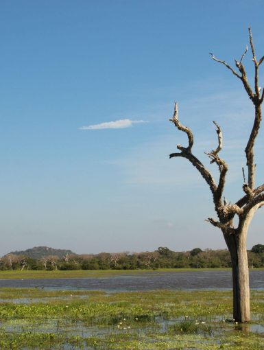 The Yala National Park, © Silvia's Trips