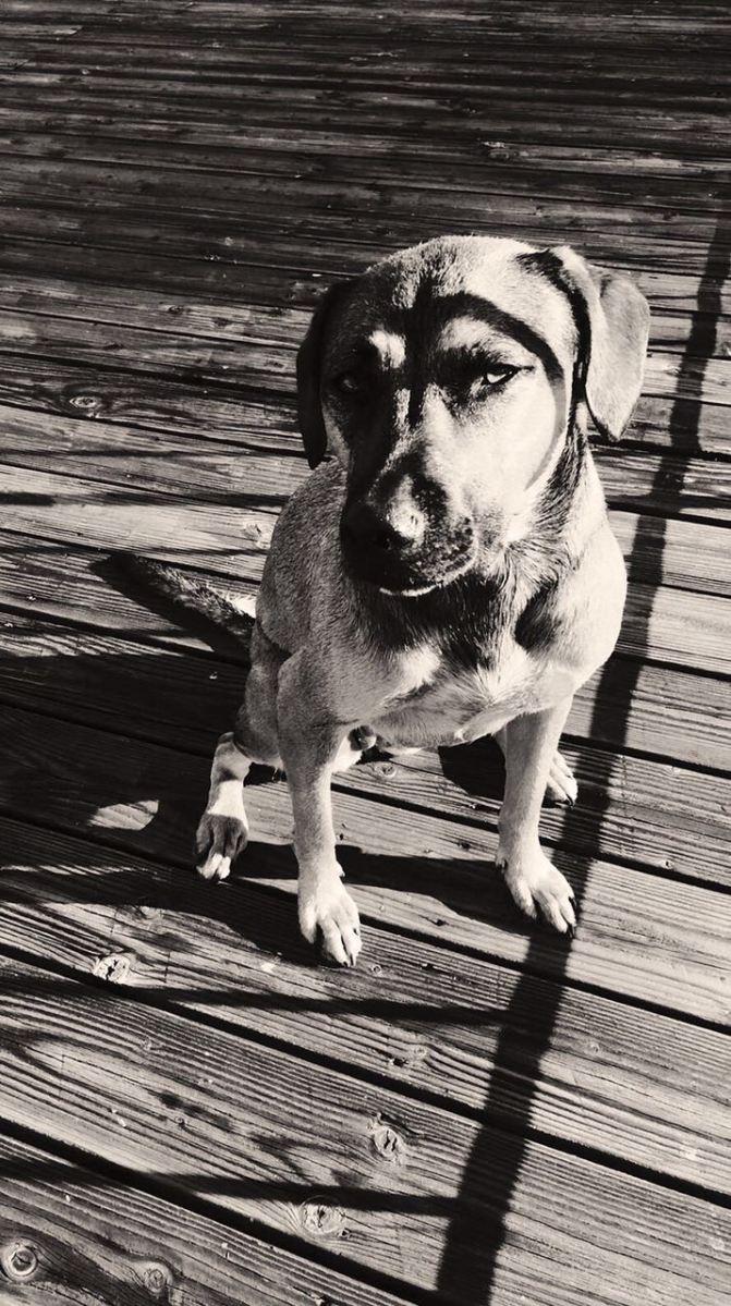單身狗 – Simaz