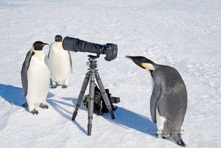 penguen