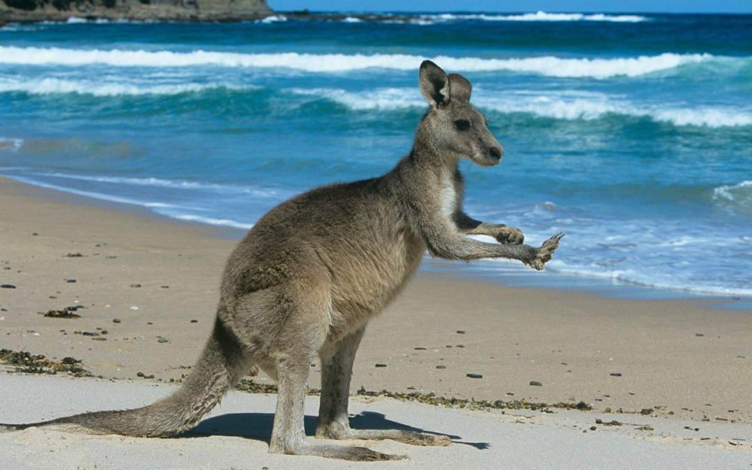 Discover Australia: The Tour of a Lifetime!