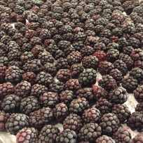 Blackberries from the farm