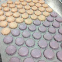 Macaron Shells from the baking class