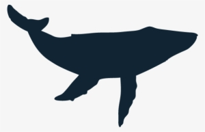 Blue Whale Silhouette At Getdrawings Humpback Whale Whale Silhouette Transparent PNG 600x506 Free Download on NicePNG