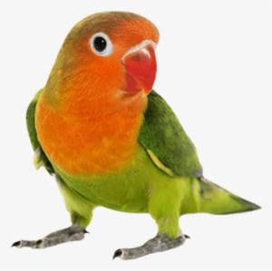 birds hd png download