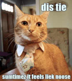 cat wearing tie, worries about life