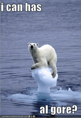 i can has al gore? polar bear drowning
