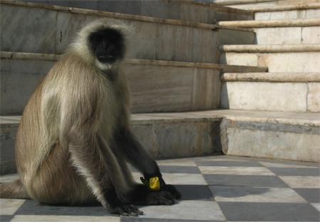 a different kind of monkey - photo by jeremy clarke