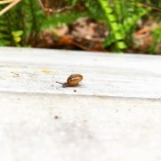A snail friend I found at work