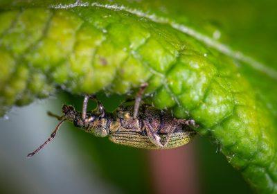 Los insectos tienen hambre
