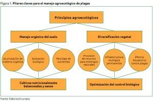 Agroecología: ciencia fundamental para el diseño de fincas resilientes a plagas