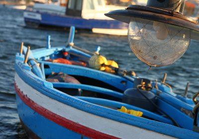Los peces acumulan antidepresivos, antibióticos y componentes de cremas solares
