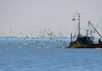 La UE prohibirá la pesca eléctrica para el año 2021
